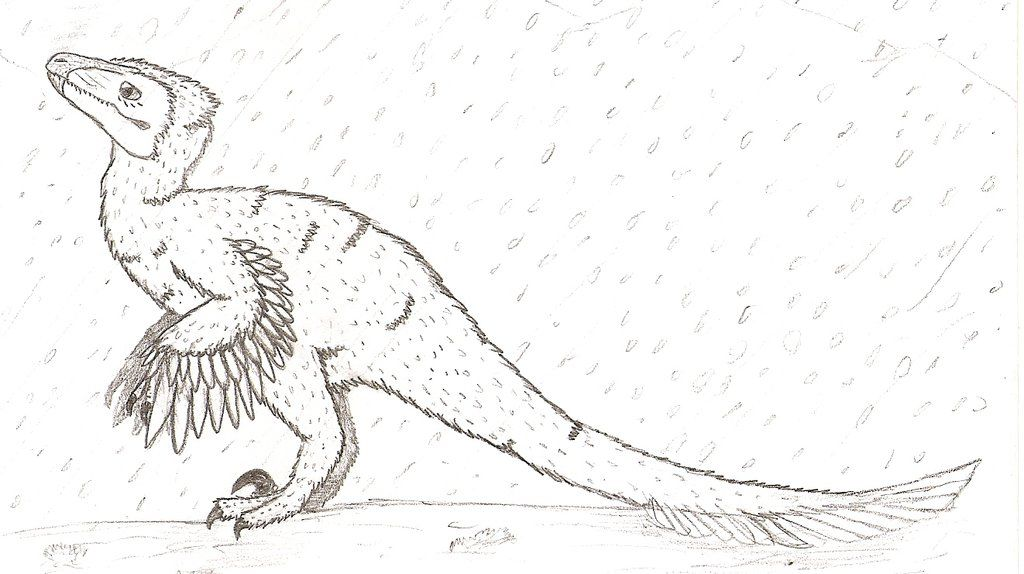 Dromaeosaurus Outline Google Search Sketches Art Humanoid Sketch