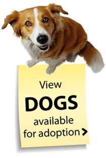 Adopt A Pet Spca Of Wake County Pet Adoption Center Adoption Dog Adoption