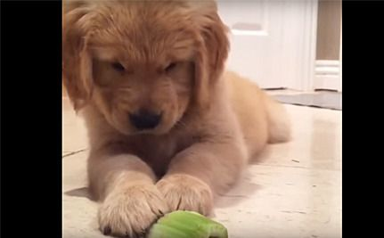 Daily Cute This Puppy Doesn T Want To Eat His Vegetables Puppies Cute Network For Good