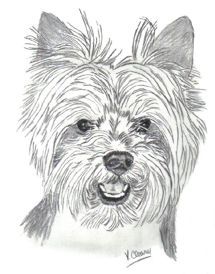 Yorkie In Puppy Trim By Gingerc Step By Step Drawing In 2019 Art