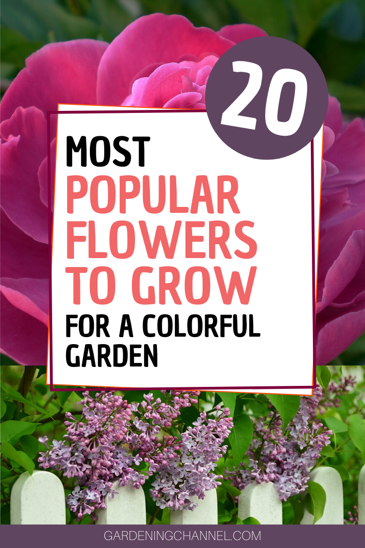 20 Most Popular Flowers To Grow In A Garden Gardening Channel In 2020 Popular Flowers Most Popular Flowers Flowers