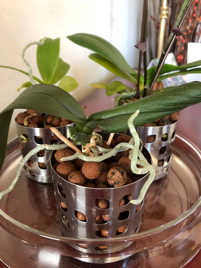 Watch Them Bloom In Semi Hydroponic Orchid Pot Hack Orchid Pot
