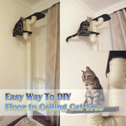 Pvc Cat Furniture Homemade Floor Ceiling Tree With Portrait Diy Cat Tree Plans Cat Tree Diy Cat Tree