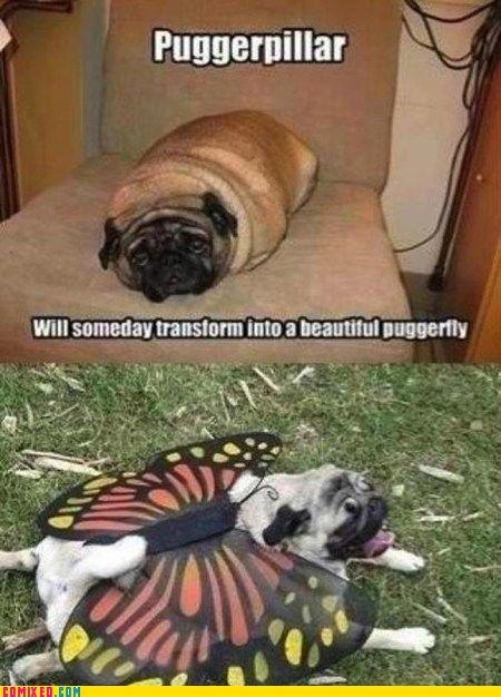 The Puggerpillar