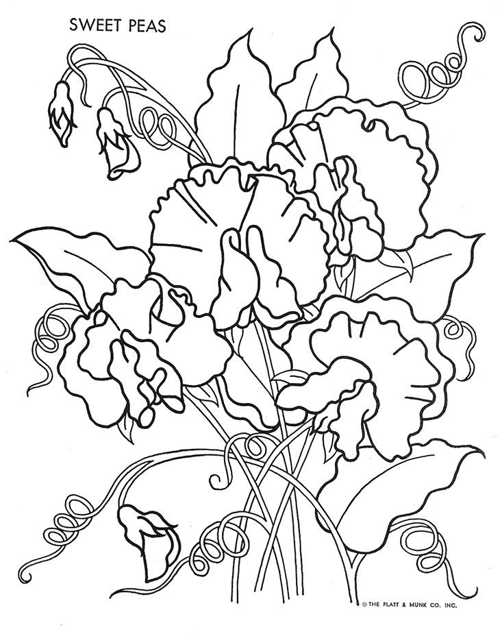 Sweet peas nak desenleri pinterest embroidery for Sweet sixteen coloring pages