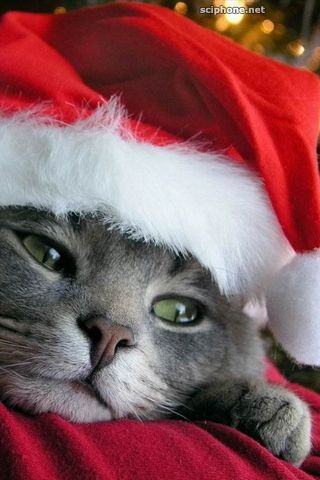 Santa Cat Iphone Wallpaper Christmas Pinterest Christmas Cats