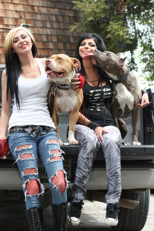 Pin On Pit Bull And Parolees