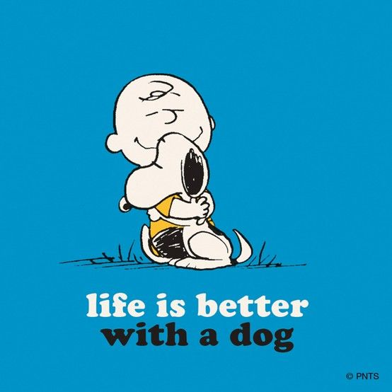 .Life is better with a dog.