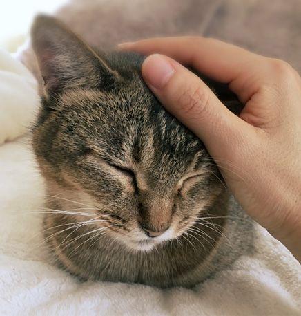本日休業 譲渡会のお知らせと胡麦通信とマル胡ゆ写真 くるねこ大和 くるねこ大和 キュートな猫 ねこ