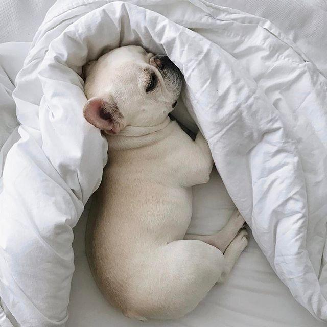 English Golden Retriever Puppy Ideas For Puppy Photos Dog