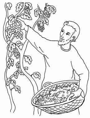 A Vineyard Worker Bible Coloring Pages Sunday School Coloring