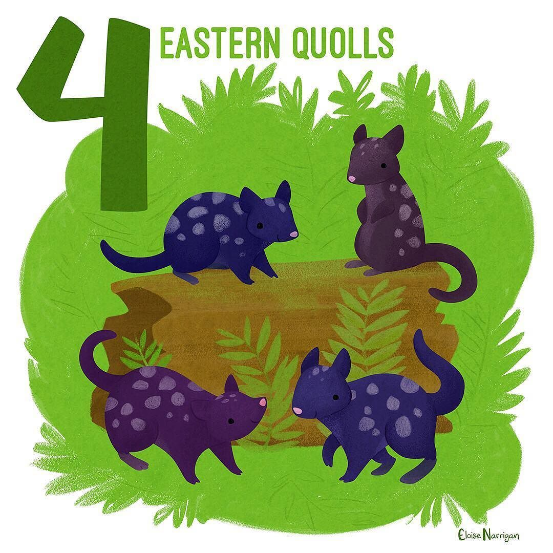 Four Eastern Quolls This Animal Looks A Little Feline Or Rodent Y But Its Actually A Marsupial Theyre Australian Fauna Animal Illustration Australian Animals