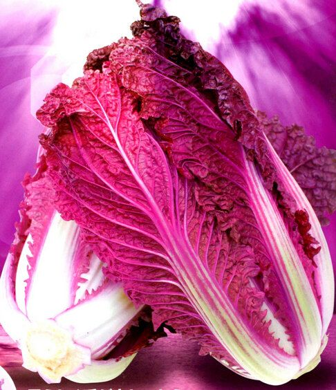 Non Gmo Garden Plants 5 Seeds Michihili Purple Chinese Cabbage Wong Bok Brassica Rapa Wahwahtsai Vegetable Seeds Chinese Cabbage Cabbage Vegetable Seed