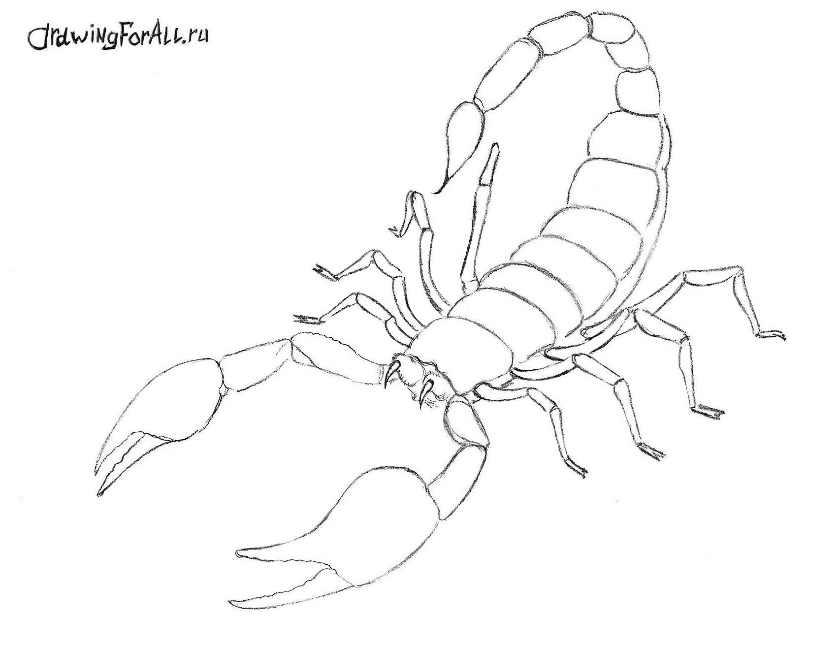 Kak Narisovat Skorpiona Risunki Zhivotnyh Skorpion Risunki