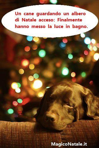 Foto Di Natale Con Cani.Auguri Di Natale Con Cagnolino Divertente Buon Natale