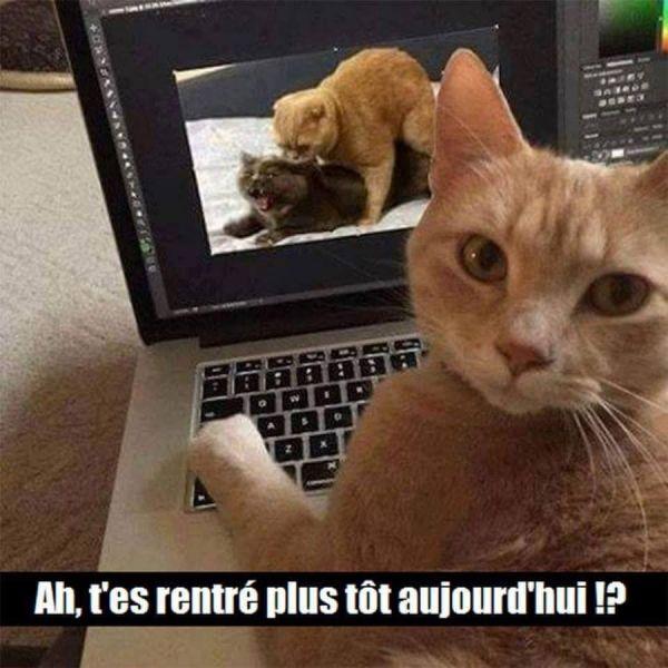 Le Chat Surpris Sur L Ordinateur Image Chat Drole Animaux Amusants Images Droles