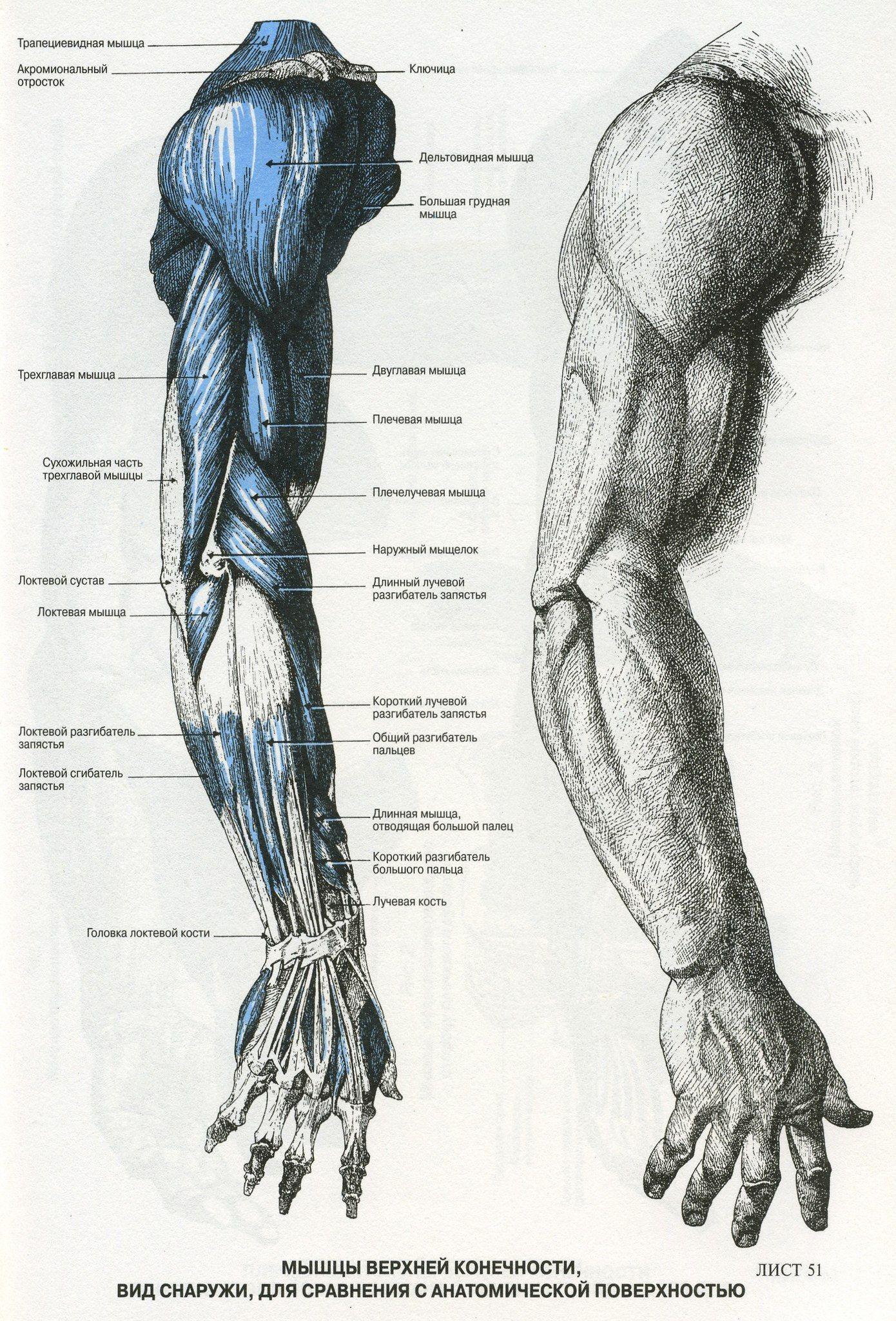 BaekKhJl7mw.jpg (1390×2048)   Anatomia   Pinterest   Anatomía ...
