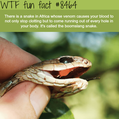 New Funny Facts 20 Insane Facts to Make You Seem Smarter at Parties 20 Insane Facts to Make You Seem Smarter at Parties - FAIL Blog - Funny Fails
