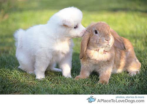 gee your fur smells terrific