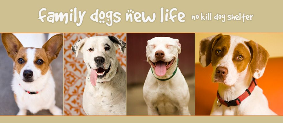 Adoptable Dogs Dogs Family Dogs Dog People
