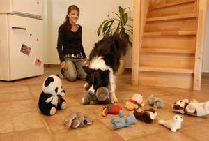 Meldung Details Martin Rutter Dogs Tipps Hunde Tiere