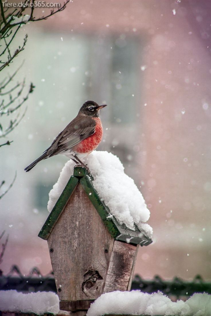 Schöne Weihnachtstiere aus aller Welt