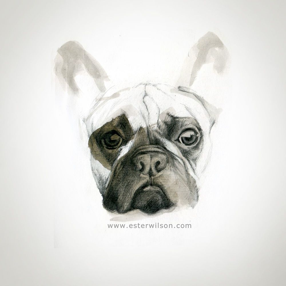 Graphite and ink drawing of a dog portrait by ester wilson
