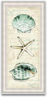 Coastal Shells Framed Painting Print