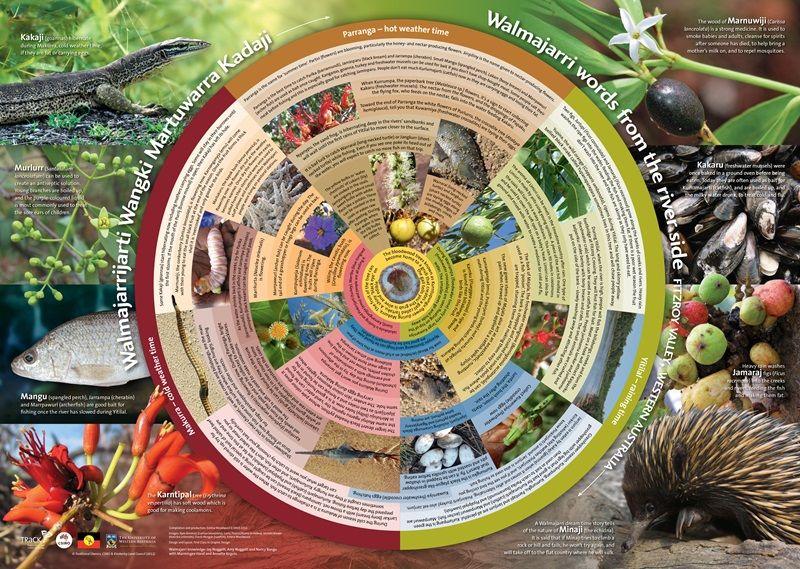 Walmajarri Seasonal calendar (Fitzroy River Valley, WA