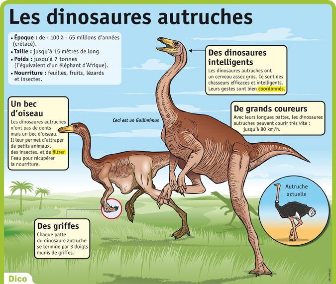 Fiche exposés : Les dinosaures autruches