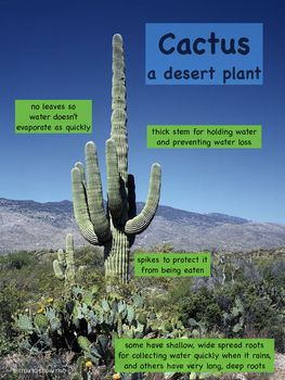 Plant Adaptations Posters (With images) | Plant ...