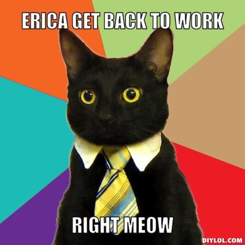 745d296fcf0c24c5af0a673d1cc381fc resized_business cat meme generator erica get back to work right