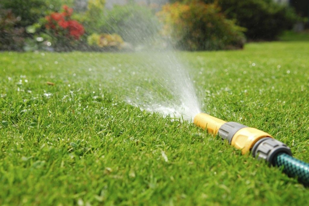Lawn Watering Guidelines Best Time To Water Lawns And How