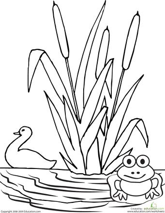 Color The Pond Worksheet Education Com Coloring Pages Preschool Coloring Pages Bird Coloring Pages