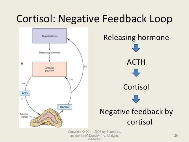 Acth Negative Feedback Loop Google Search Negativity Negative Feedback Cortisol
