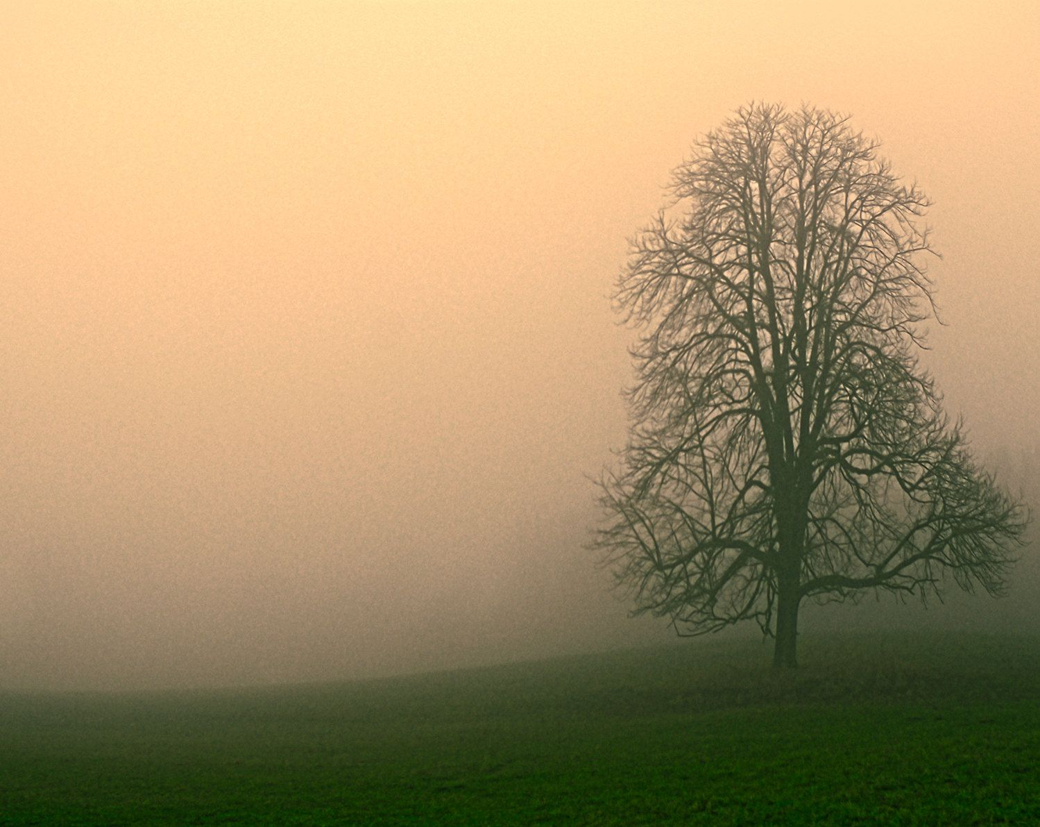Foggy morning. Lonely tree. Digital photo, instant download ...