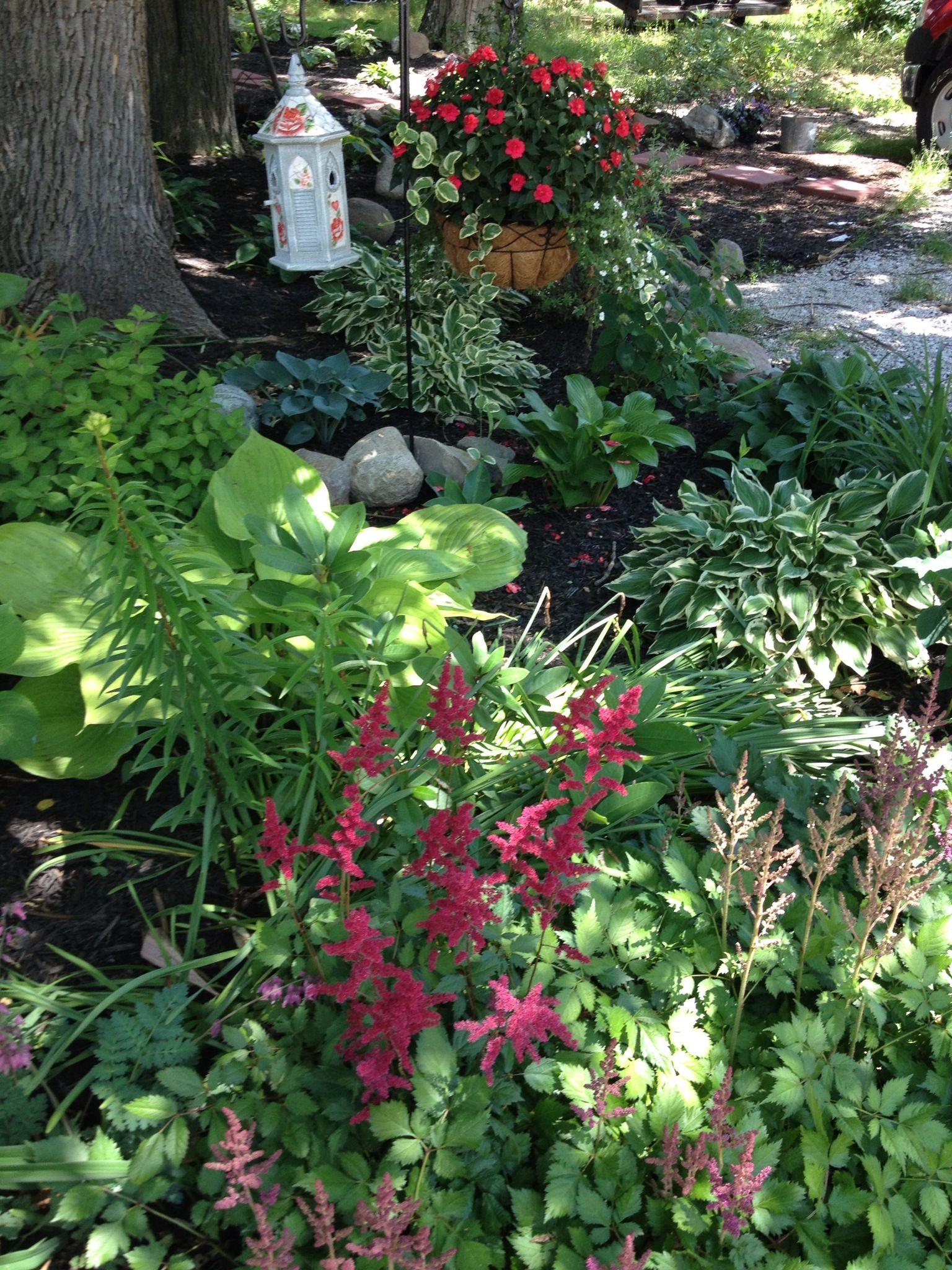 Shade garden: hosta, astilbe, ferns, impatients (pot) - Shade ...
