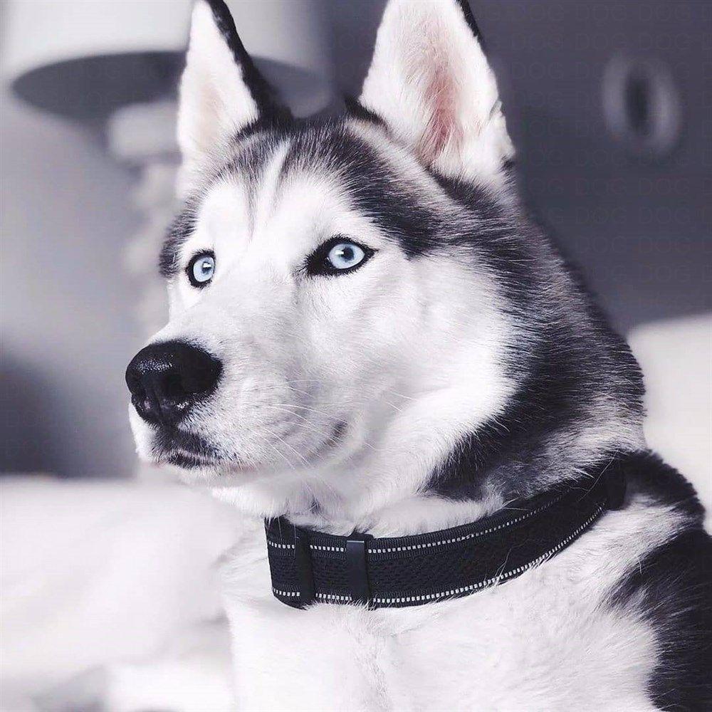 Pin Von Sanni219 Auf Huskies In 2020 Hunde Futter Husky Lustig