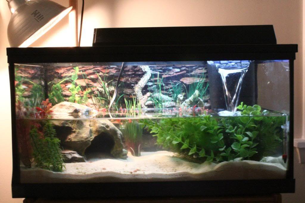 Aquatic turtle tank turts and torts pinterest turtle for Fish tank turtles
