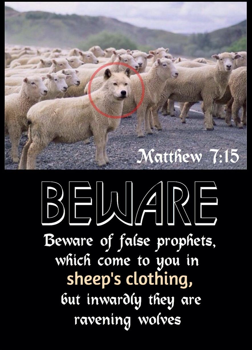 """Matthew 7:15 Great verse, but the pic tho... """"I'm a freak of nature hangin'  out with these sheep got a pr… 