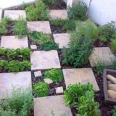 Checkerboard Herb Garden