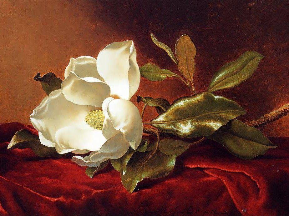 martin johnson heade paintings | magnolia on red velvet martin johnson heade about our paintings each ...