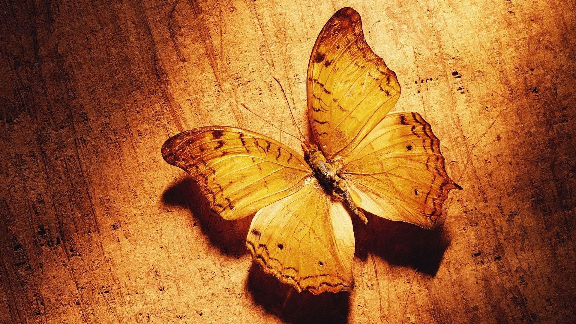 Hd Pics Photos Very Cute Beautiful Butterfly Effects Attractive Hd Quality Desktop Backgroun Brown Butterflies Butterfly Photos Butterfly Wallpaper Backgrounds