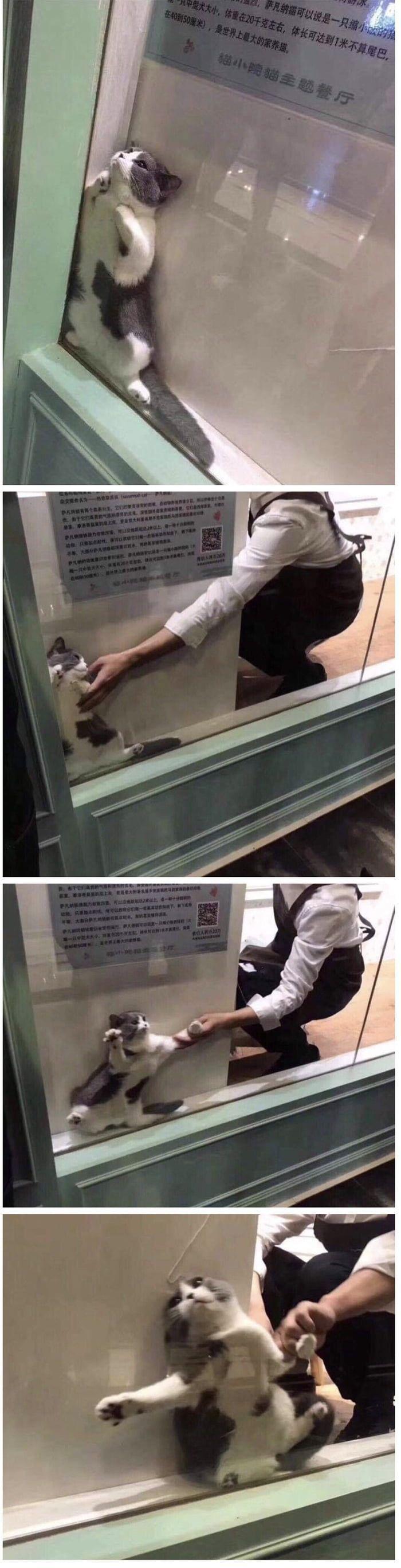 Photo of La forma en que el gato adulto encaja en el espacio de 3 pulgadas demuestra que los gatos son líquidos – Entretenimiento