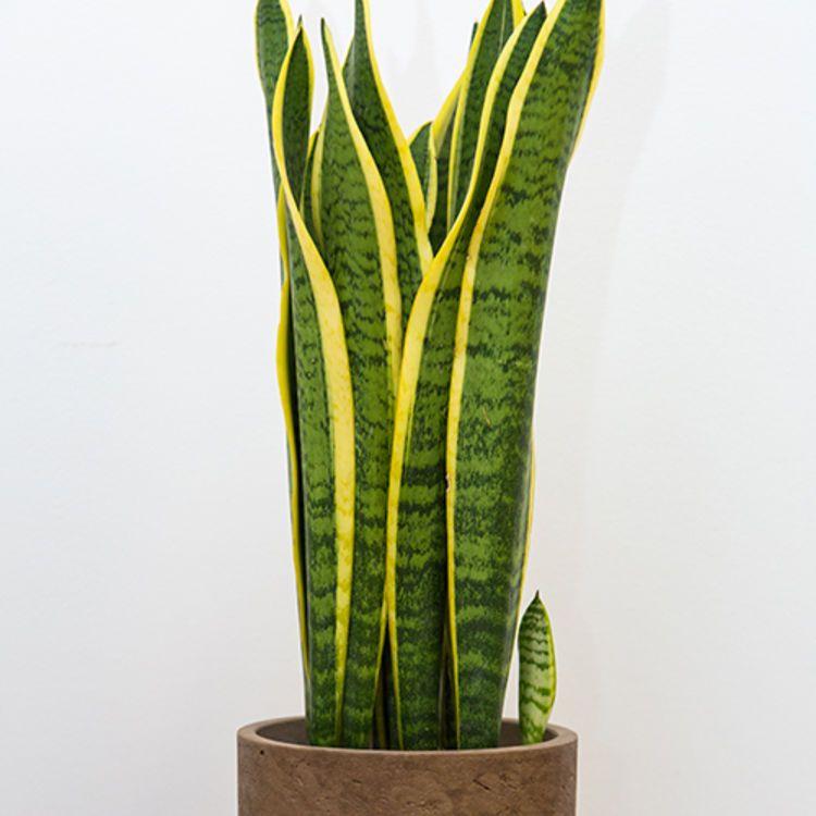 Plantes Sans Entretien Le Top 5 Des Increvables Plante Verte