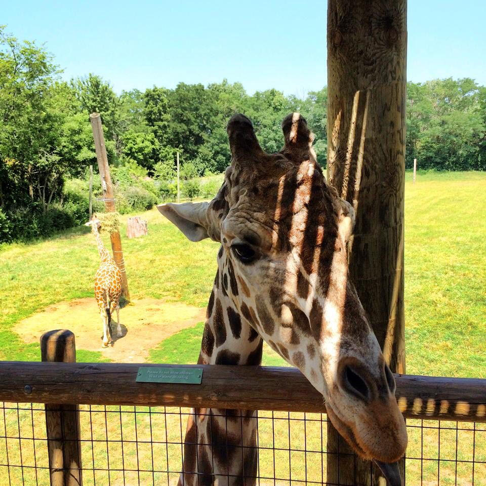 Fort Wayne Children's Zoo Fort wayne, Zoo, Animals