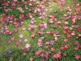 folhas e flores do brasil - Pesquisa Google