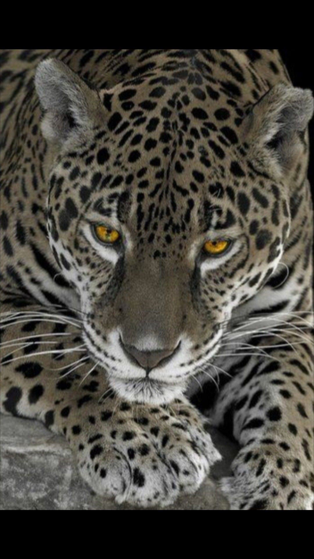 Pin By Sharon Drake All Kinds Of E On Animales In 2020 Animals Animals Beautiful Wild Cats