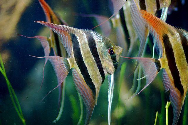 dammen av fisk dating singlar Tauranga dating