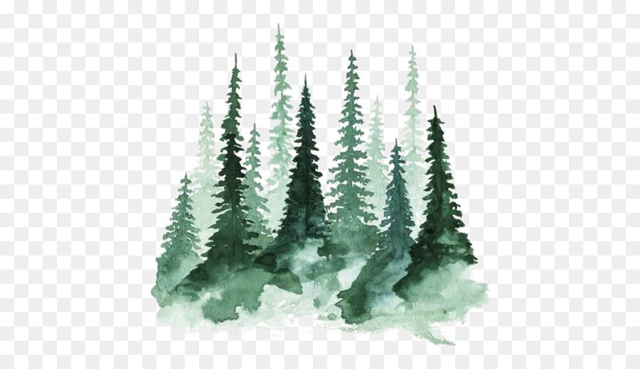 Study Of A Tree Watercolor Painting Pine Forest Png Is About Is About Fir Pine Family Watercolor Akvarelnye Serdca Zhivopis Baleriny Akvarelnaya Zhivopis All forest png images are displayed below available in 100% png transparent white background for free browse and download free forest png transparent images transparent background image. tree watercolor painting pine forest